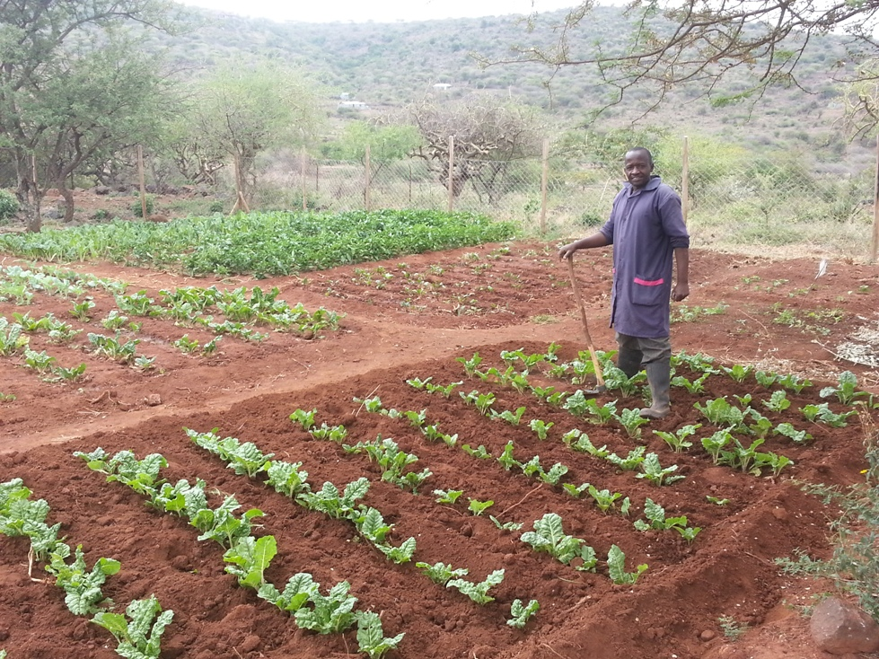 Our caretaker, Wambua, tending the school's vegetables.